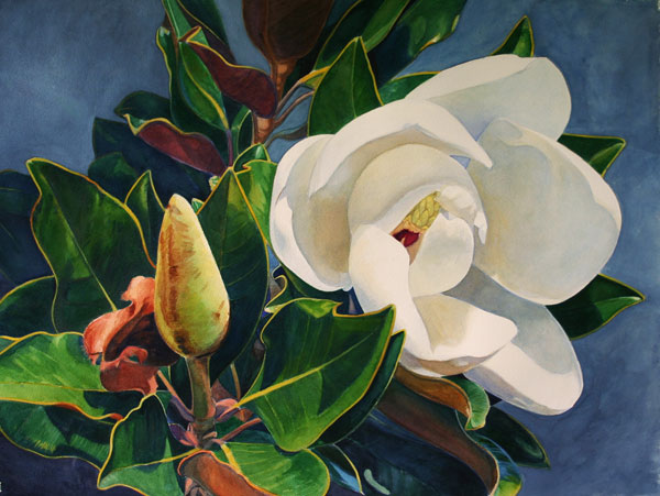 Magnolia 4, watercolor on paper